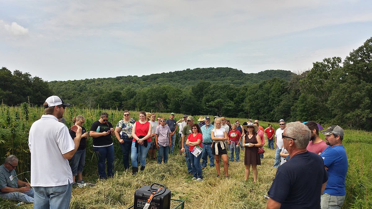 <p>Organic Valley farmers and employees take a tour of the hemp test plots during a field walk in 2018.</p>