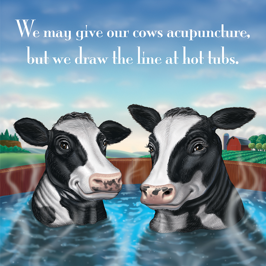 """Cartoon cows sit in a hot tub and reads, """"We may give our cows acupuncture, but we draw the line at hot tubs."""