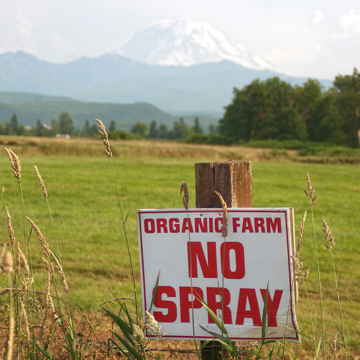 "A sign on the edge of a pasture that reads ""organic farm no spray."" Mount Ranier is in the distance."