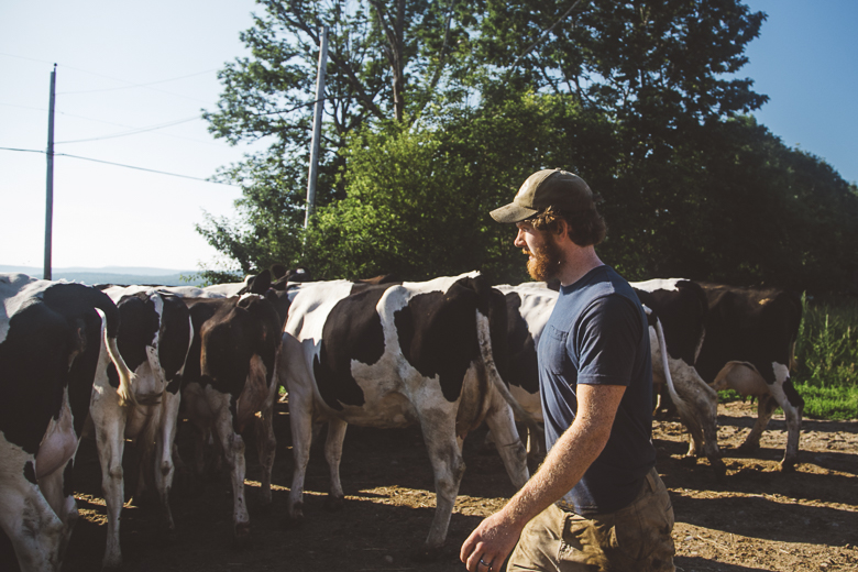 Conor MacDonald takes care of the organic dairy herd.