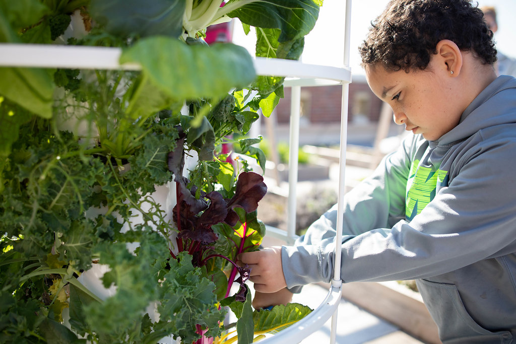 A young student tends rainbow chard growing in a vertical planter at a school garden.
