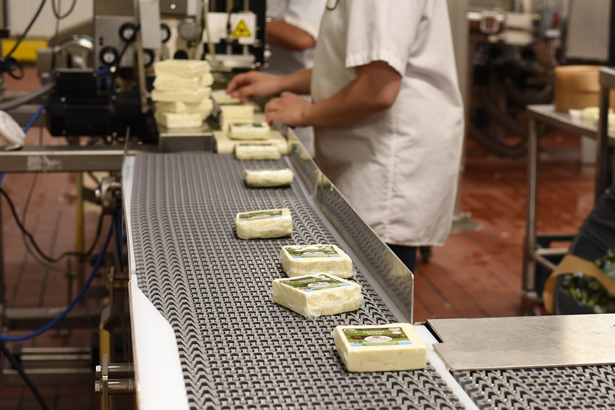 Organic Valley cheese goes through the production line.