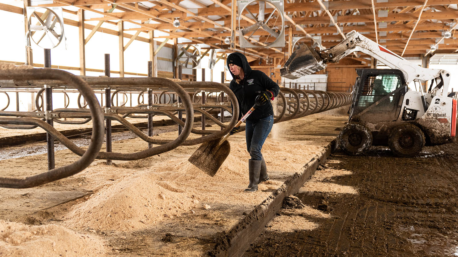 Kristina spreads out the bedding in the freestalls.