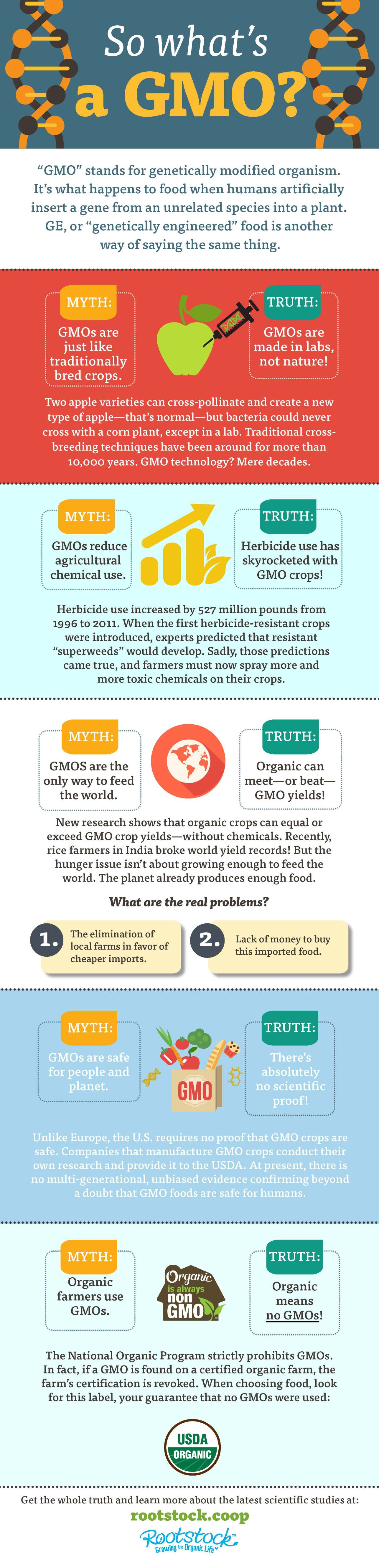 This infographic explains what a GMO is.