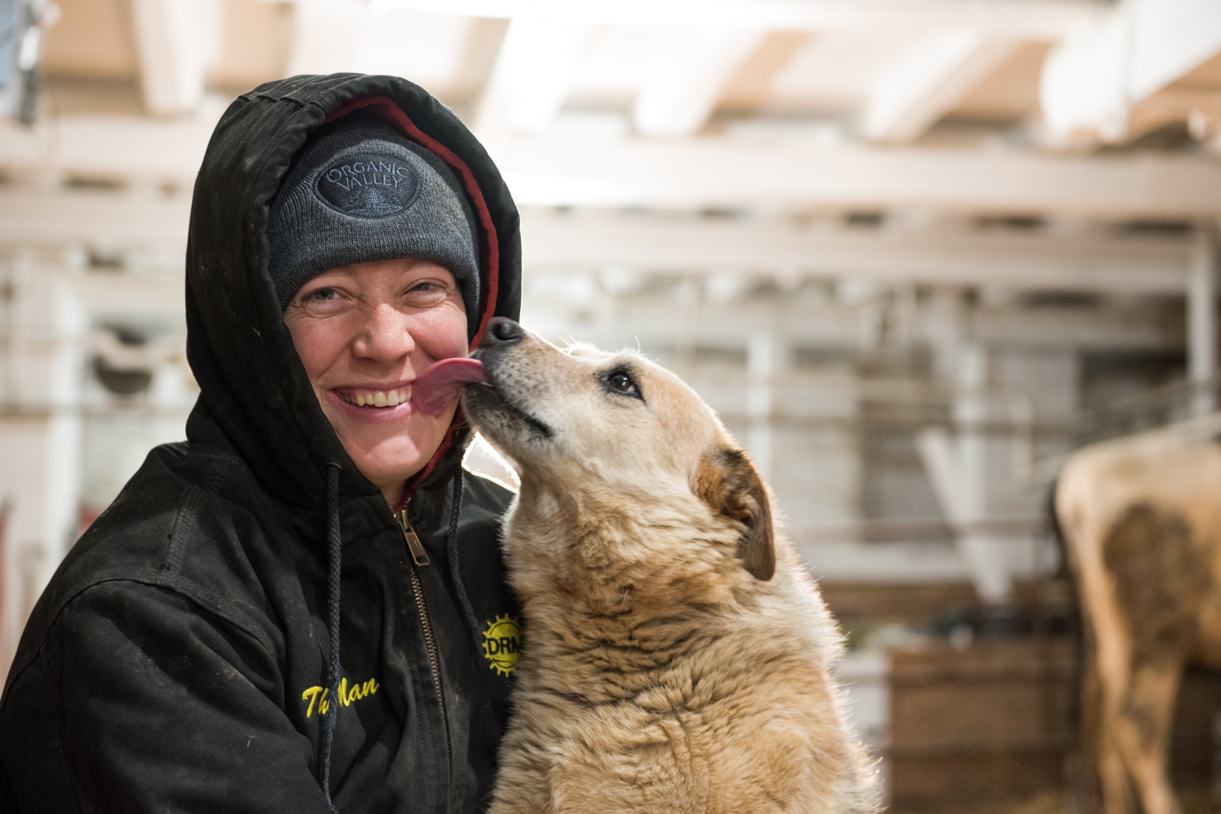 In the milking barn, Amy smiles while her dog licks her face.