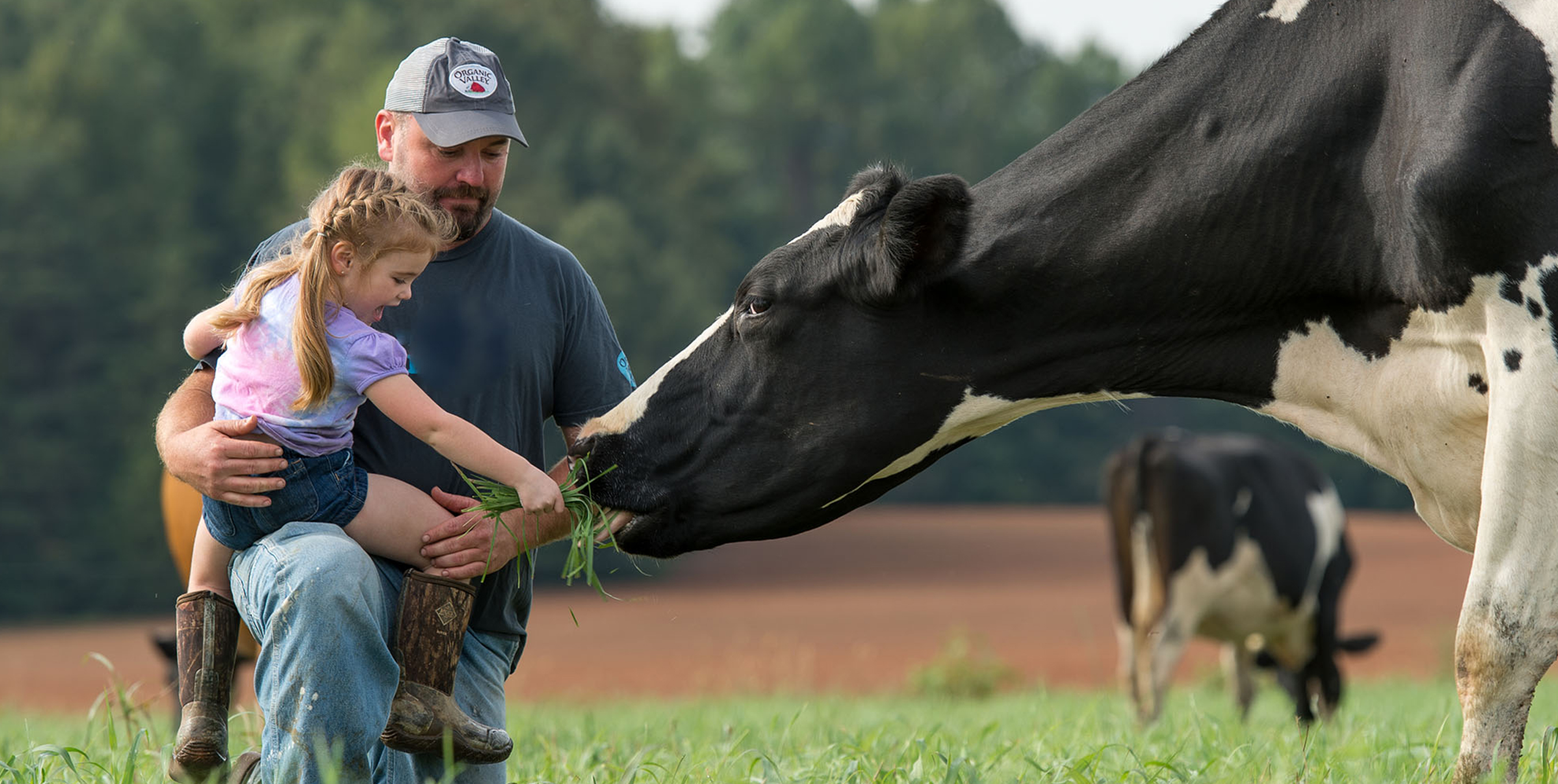 Organic Valley Ends Year Standing Strong with 2,000 Farm Families