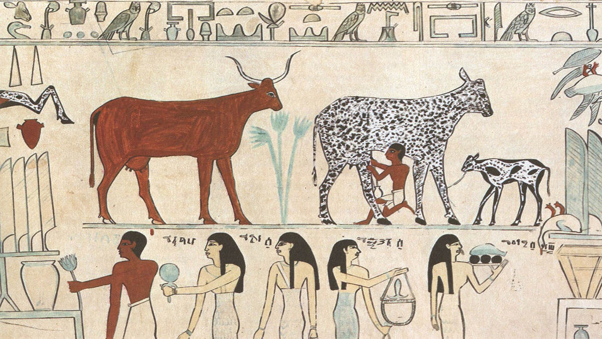 An image of Egyptian hieroglyphics showing a person milking a black and white spotted cow.