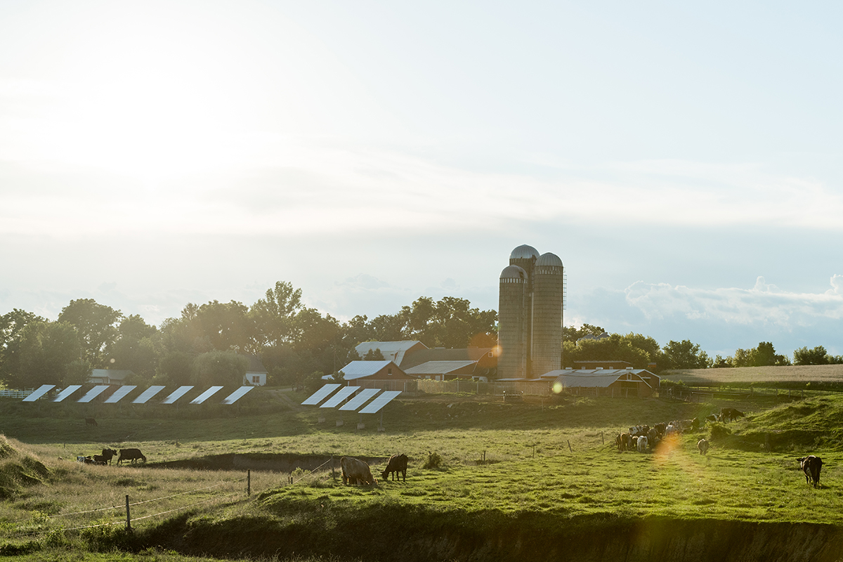 A farm with cows grazing in the foreground and solar panels and the barn and silos in the background.