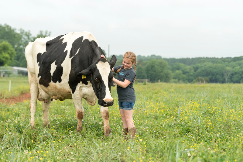 <p>Showing some love to the cows on the Hoffner family farm in North Carolina.</p>