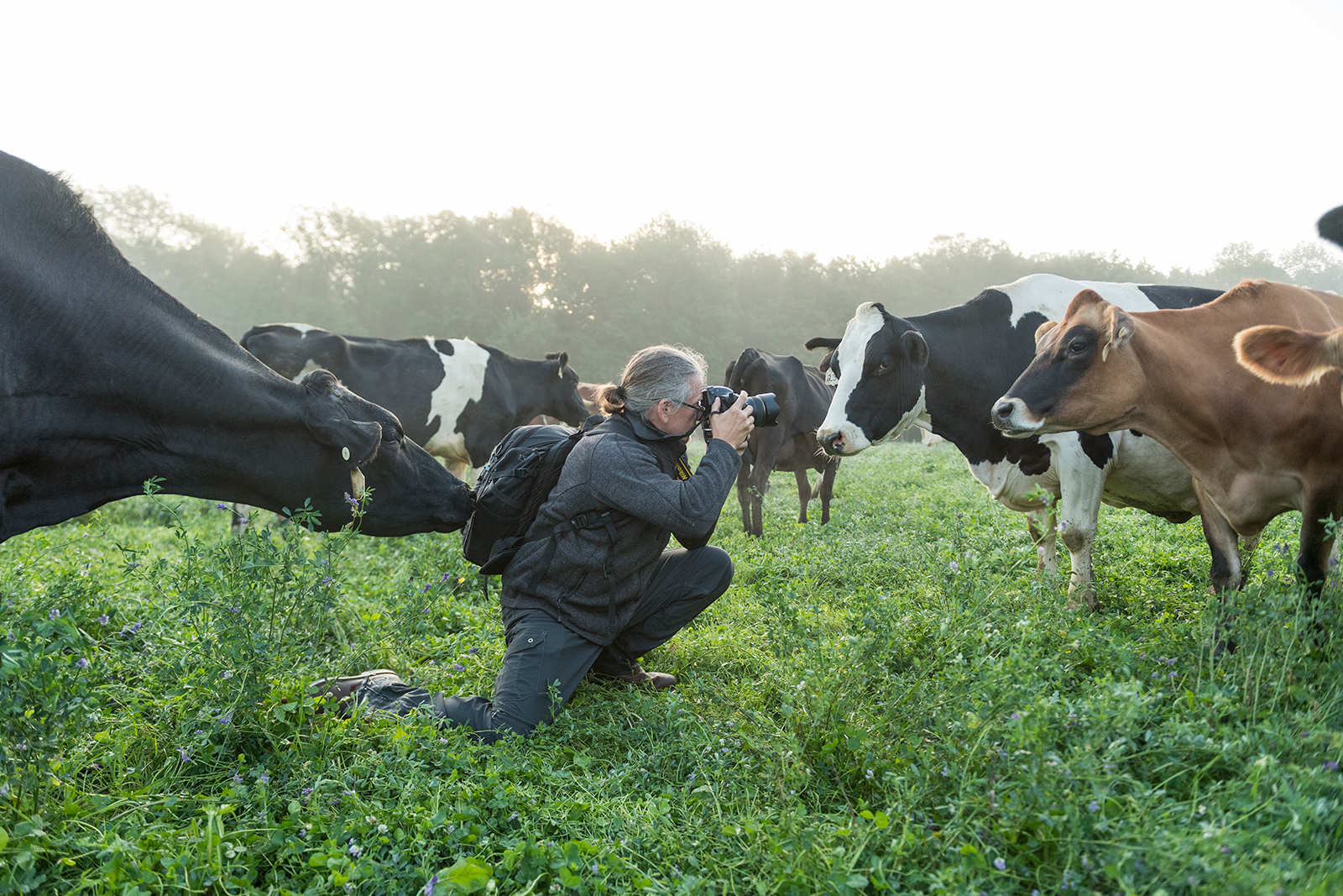 A curious cow sniffs at the photographer's backpack while he's taking a picture in a different direction.