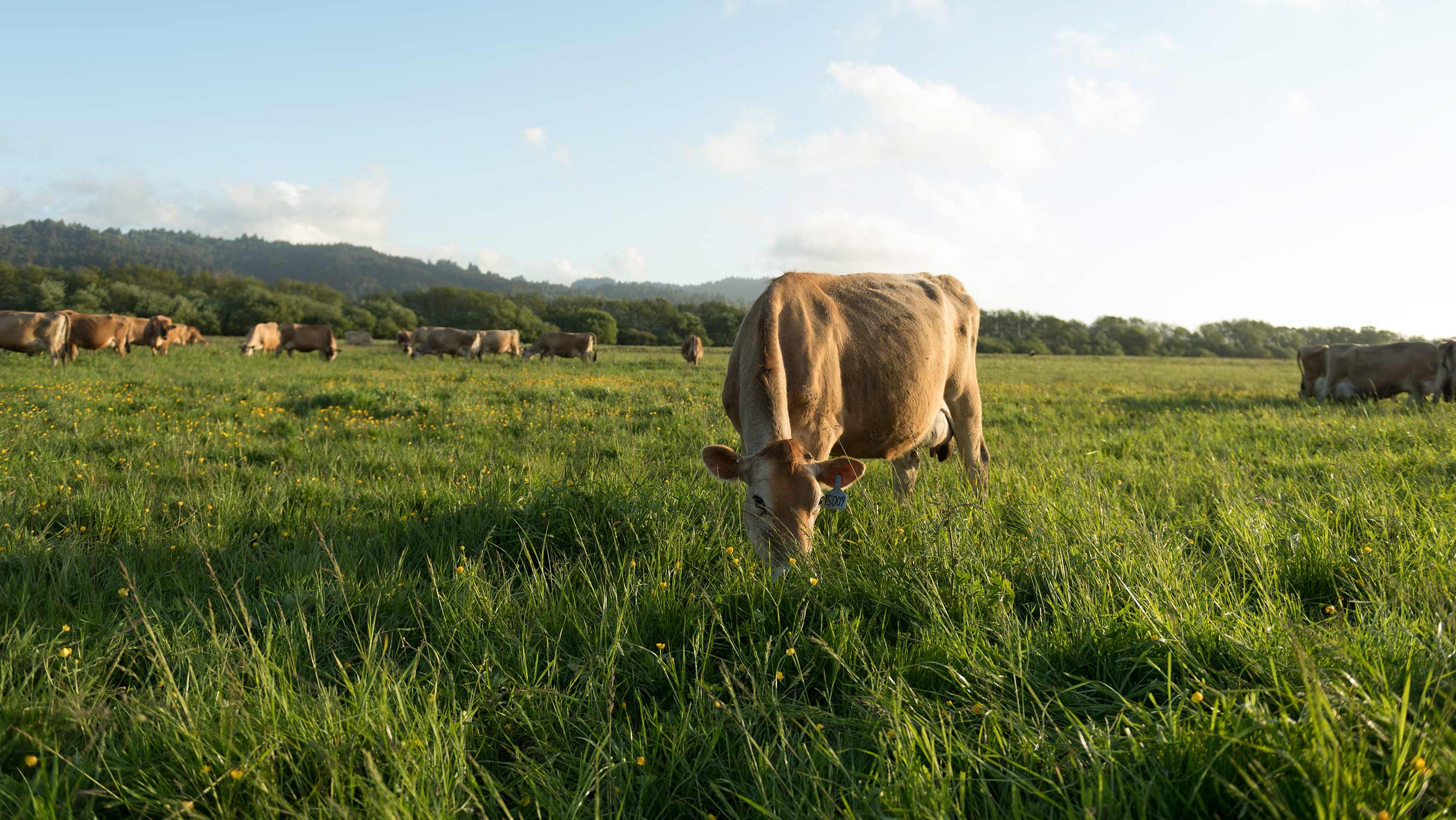 Research Paper Shows Organic Valley Grassmilk® is More Nutritious