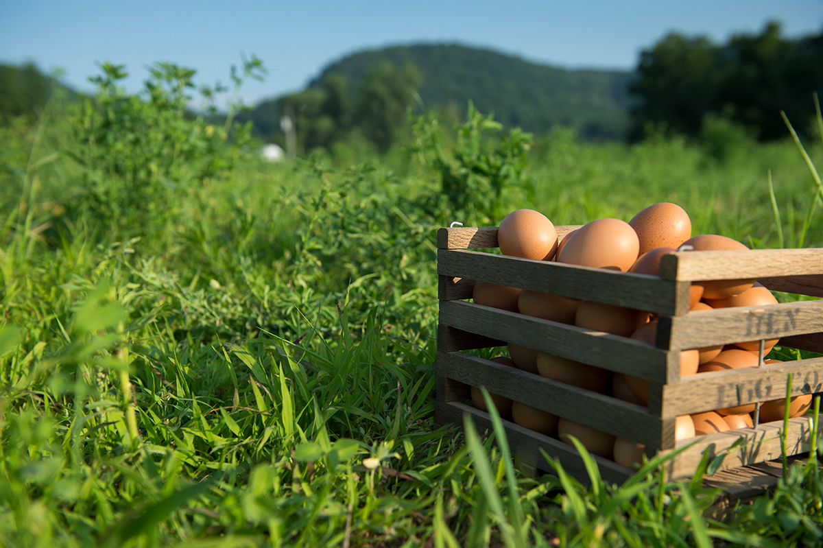 A crate of brown eggs sitting artfully in green grass against a blue sky.