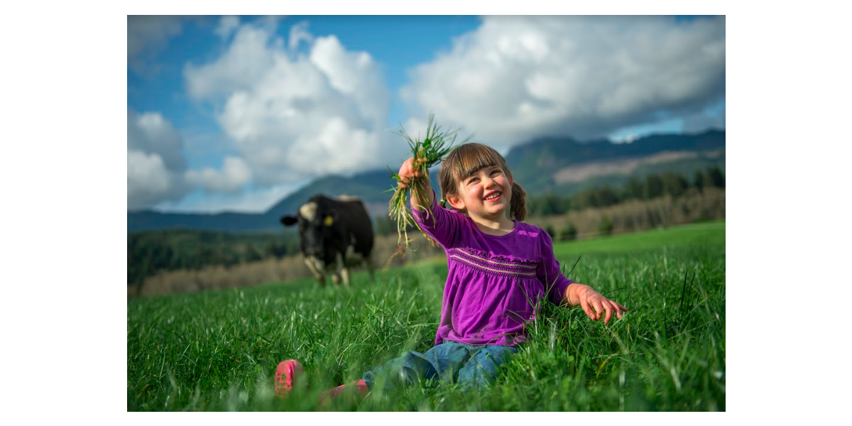 Girl holds up handful of grass, as suspicious cow creeps in the background.