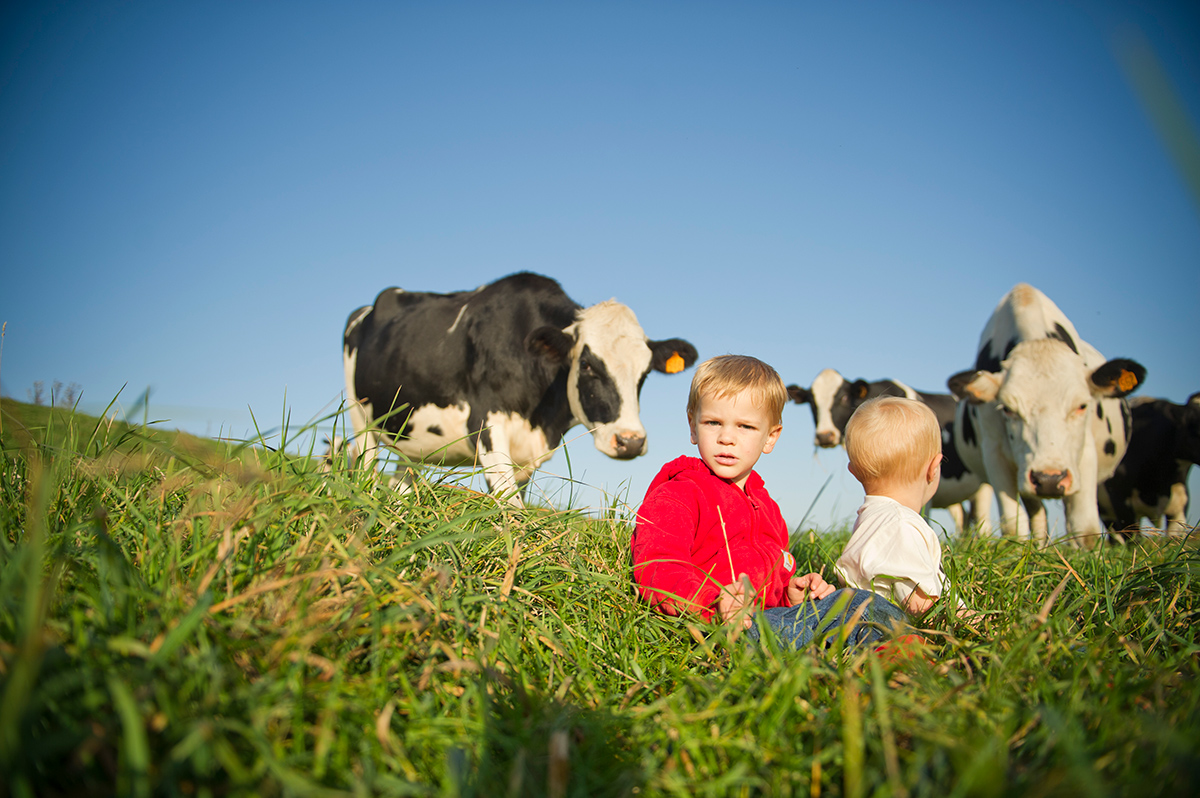Two little boys sit in the grass and one turns around to look at cows standing behind them.