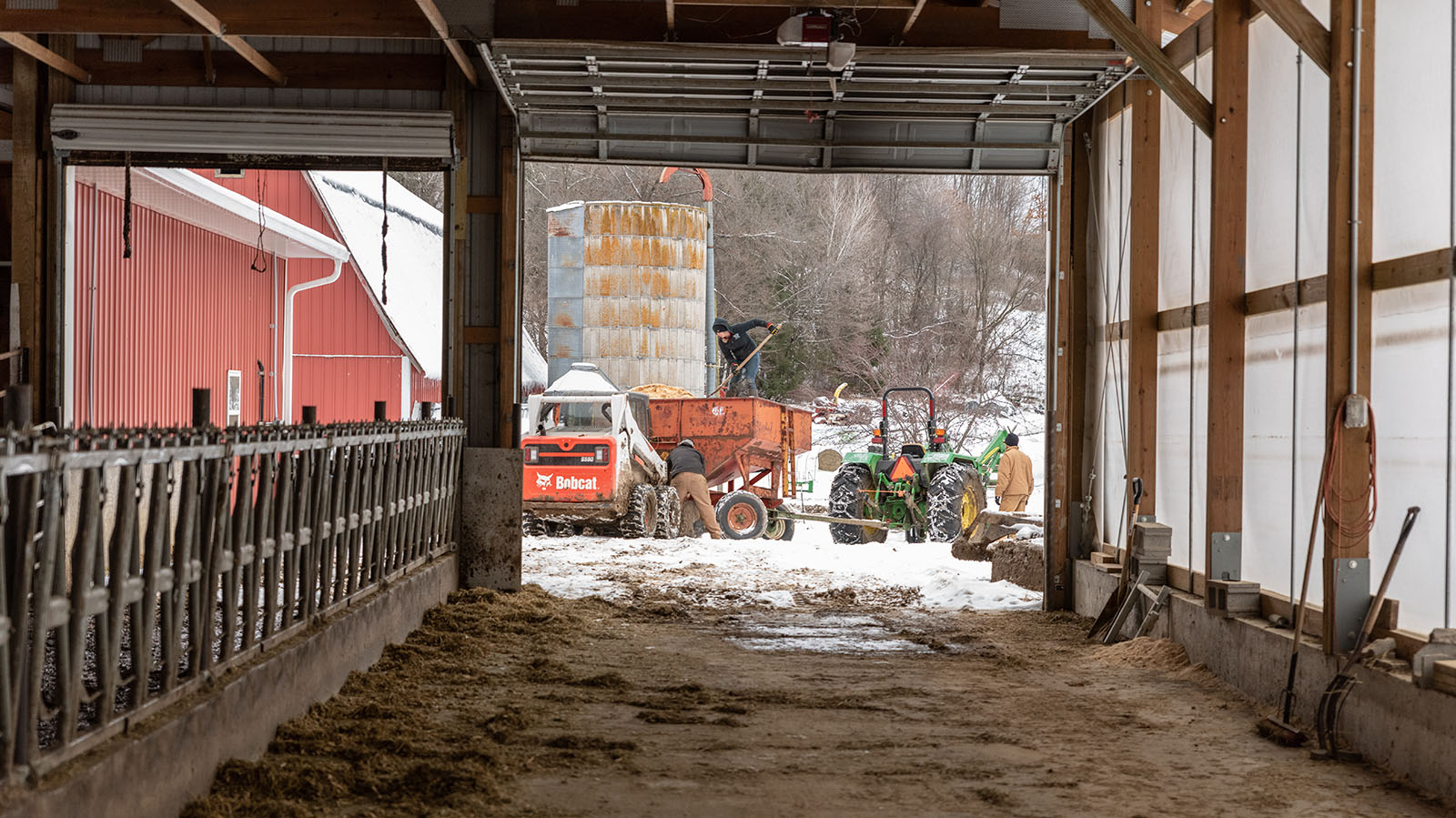 View from within the barn of farmers bringing a trailer close to the barn and standing on top to shovel bedding out.