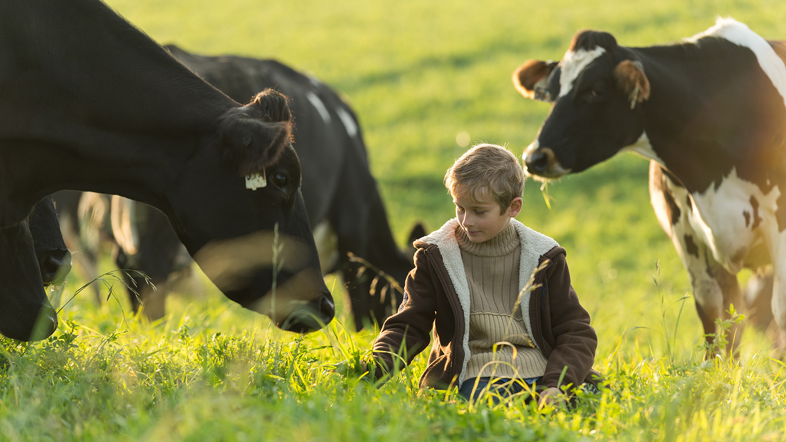 A young boy sits in a green pasture with black and white cows around him.