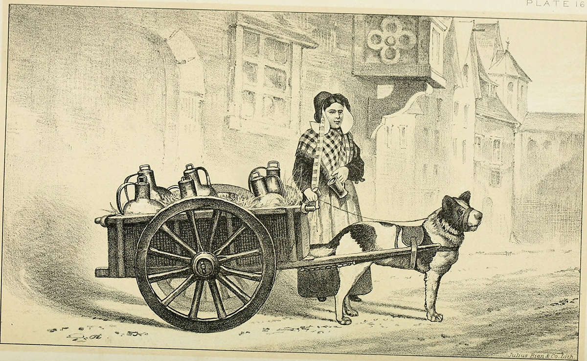 An old-fashioned scene of a woman delivering milk using a cart pulled by a dog.