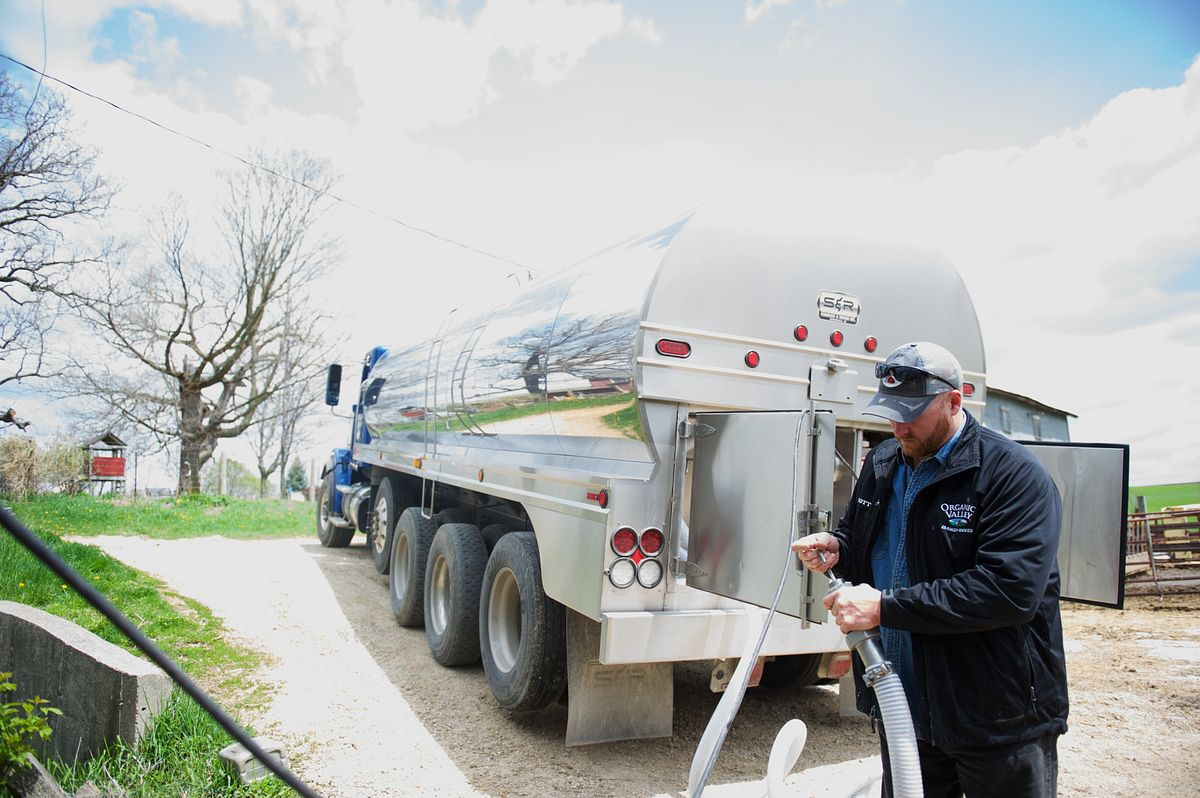 Organic milk is pumped into the milk truck on an organic dairy farm in Wisconsin.