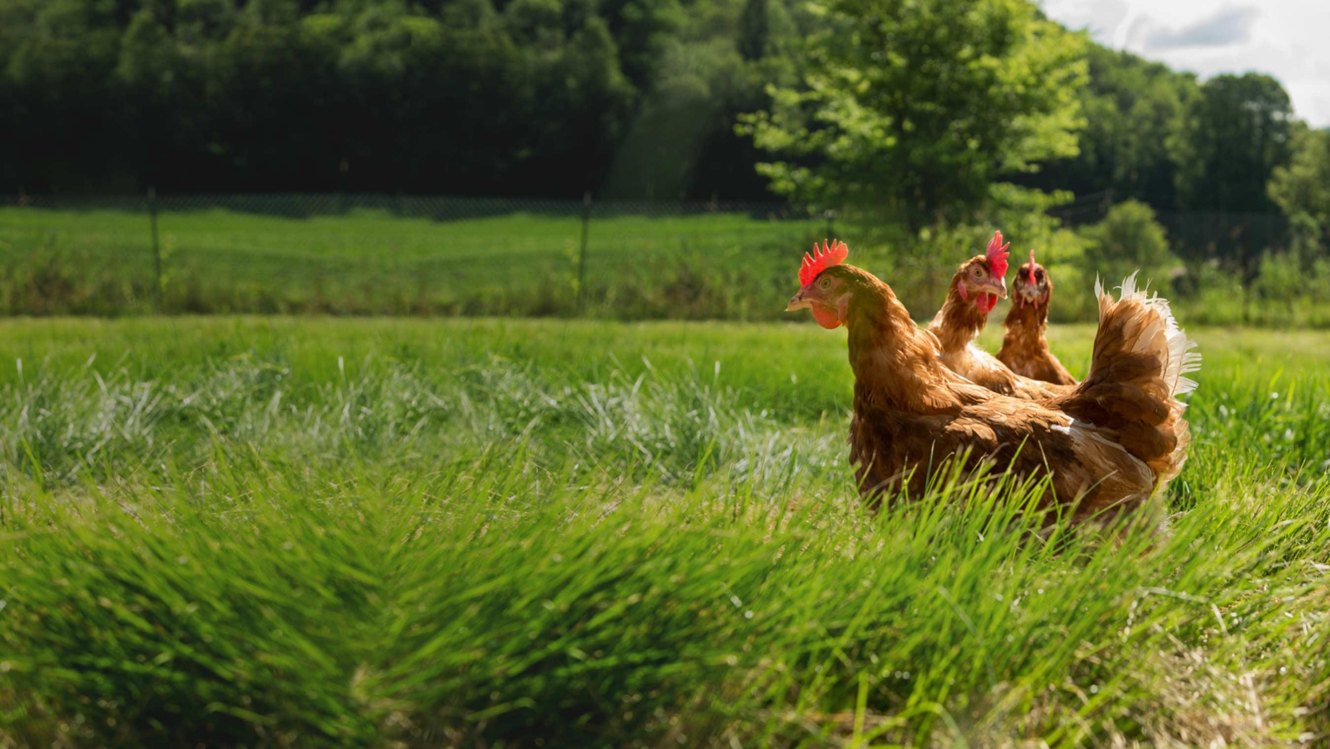 Beloved Organic Brands Make Unprecedented Protest:  Stop Attacking Organic