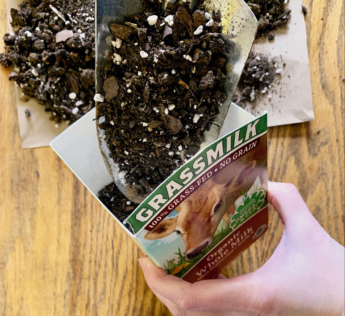 Pour dirt into the Organic Valley Grassmilk container to prep for the seeds.