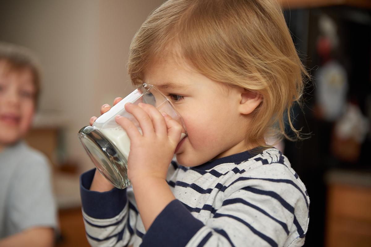 A little boy wearing a striped shirt drinks a glass of milk.