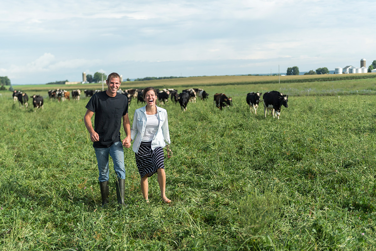 A man and woman laugh and hold hands while walking in a pasture with cows behind them.