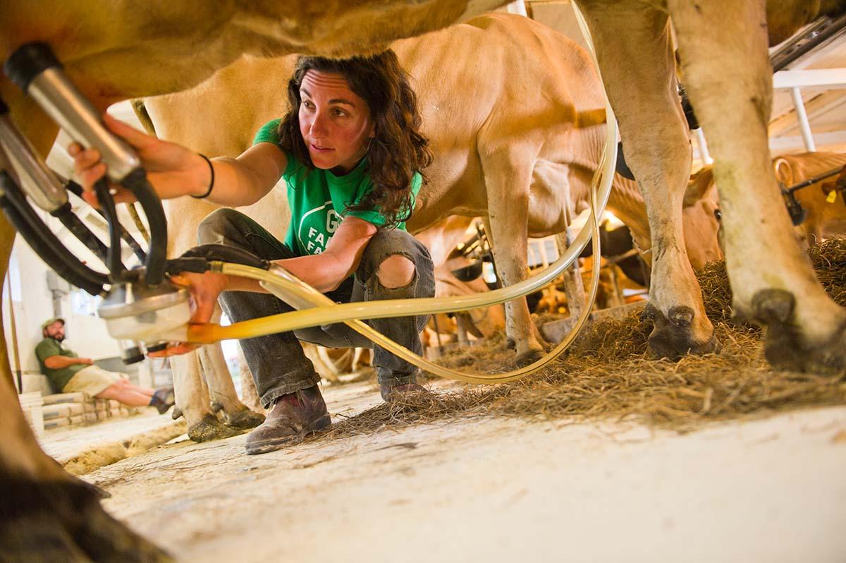 Female farmer, Melanie Webb, prepares a cow for milking in the parlor at their family farm in Vermont.