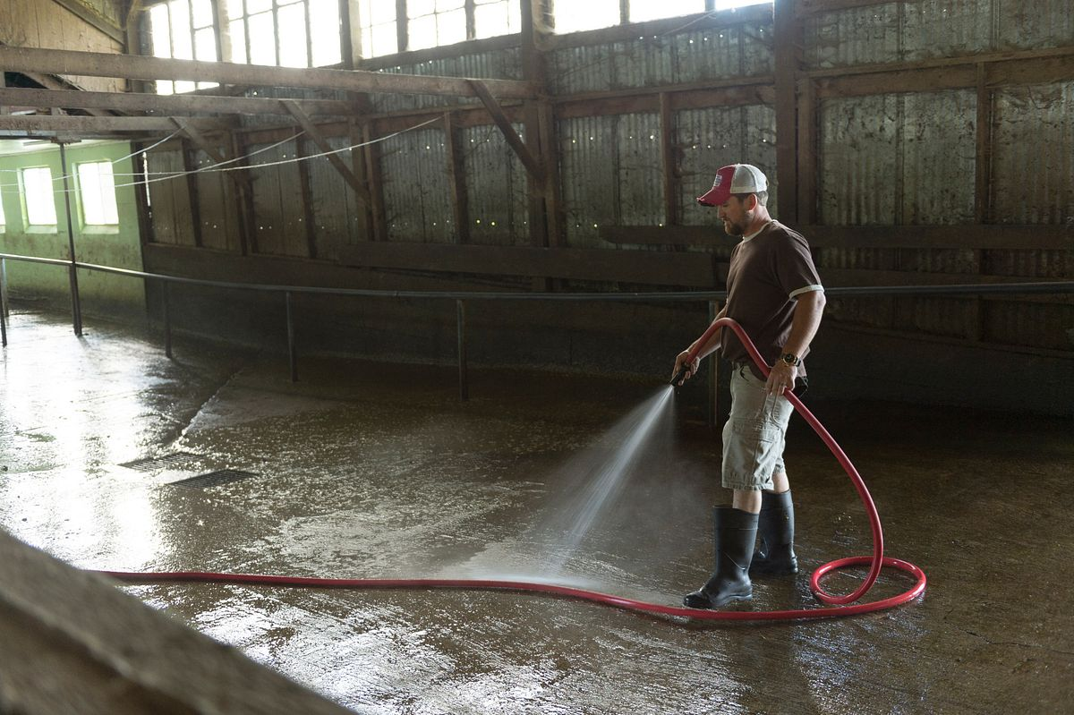 Farmer cleans out the barn for the cows with a hose.