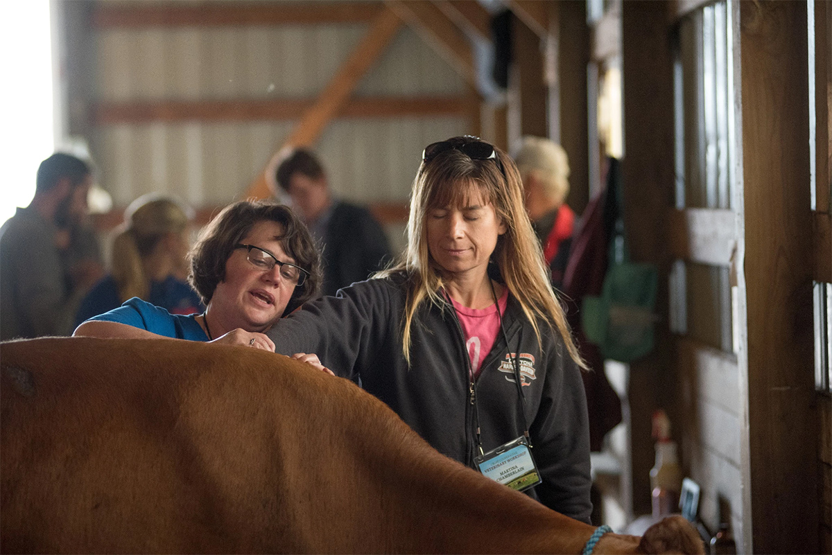 A livestock chiropractor shows an Organic Valley farmer how to feel for changes in a cow's body that could indicate it needs additional care.