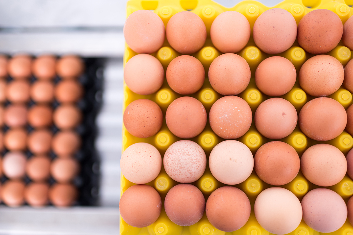 An overhead view of rows of brown eggs in a bright yellow rack.