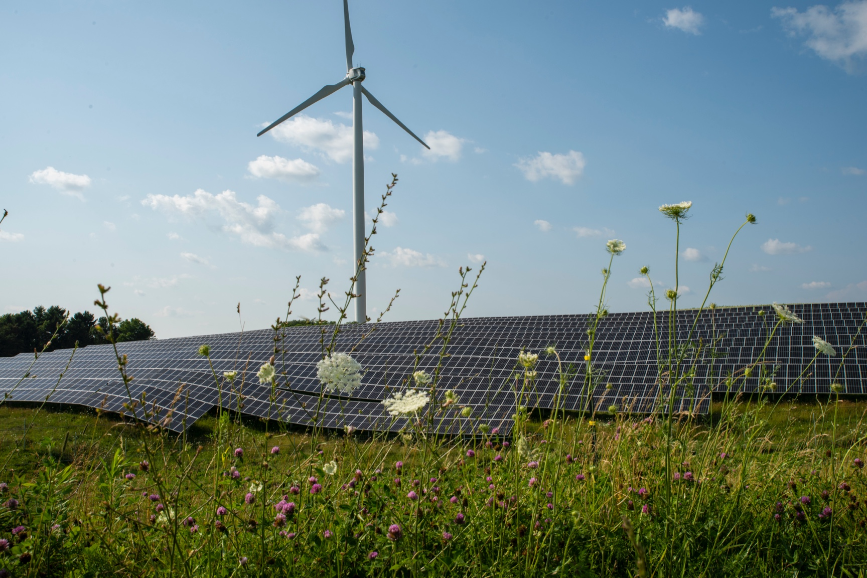 A view of the solar array with a wind turbine in the background and colorful wildflowers in the foreground.