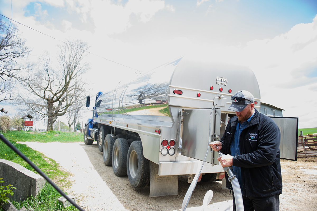 A man examines the end of the hose connecting to his milk truck.