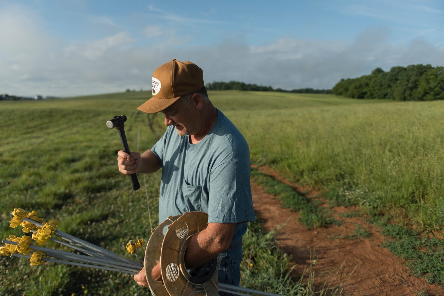 A farmer wearing an Organic Valley hat hammers portable fence stakes into his green pasture.