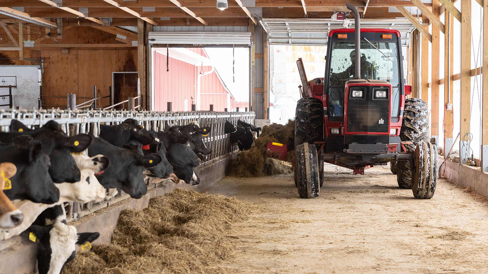A tractor brings the hay into the barn.