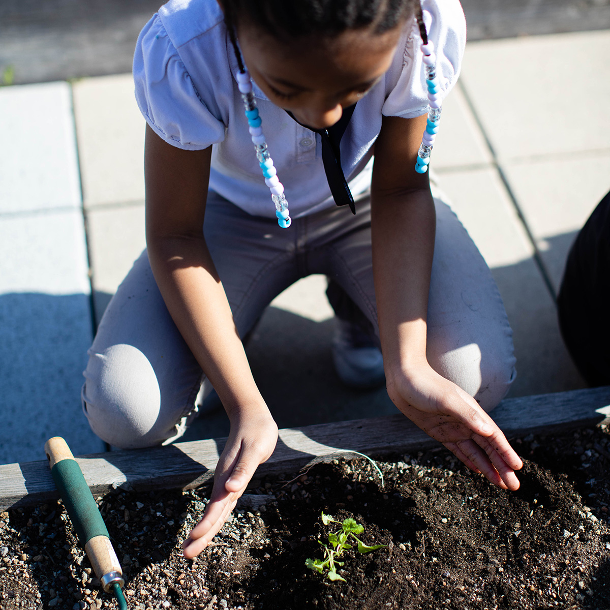 Young girl plants in the school garden.