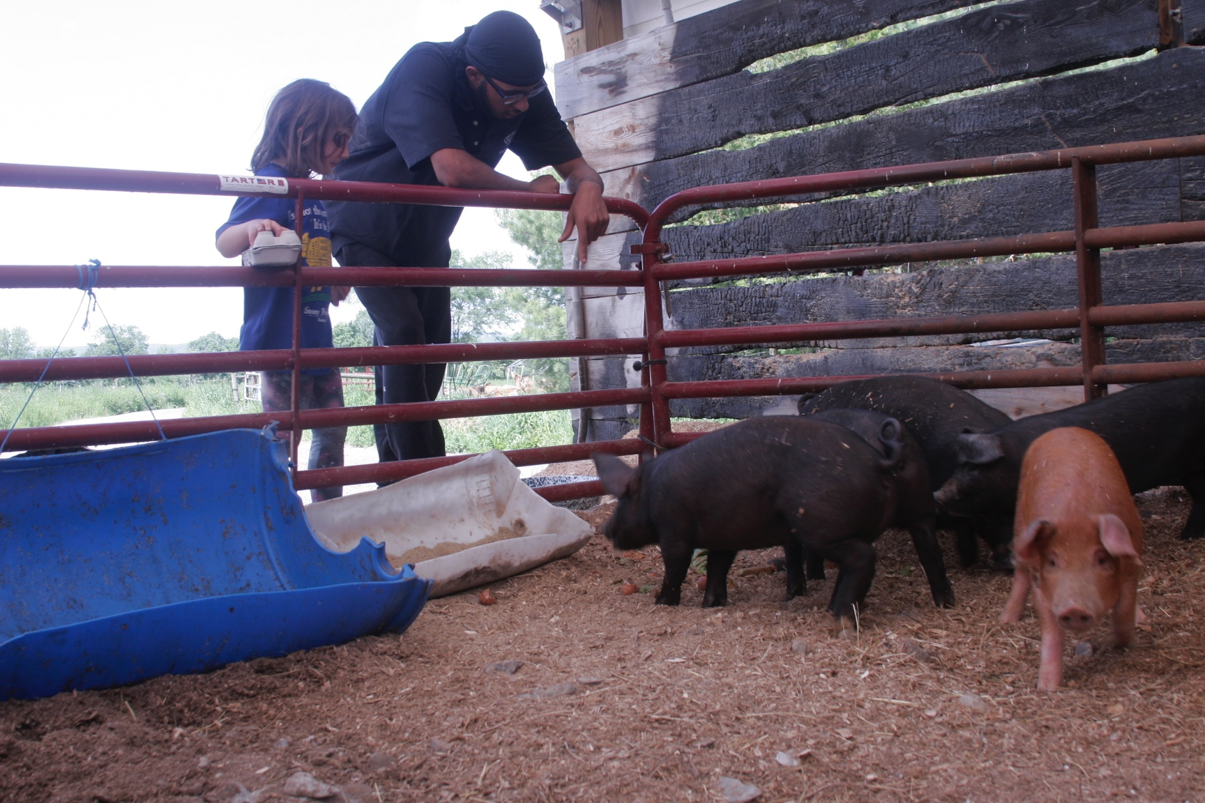 A young girl and young man lean on a fence to watch three black and one brown pig in their pen.