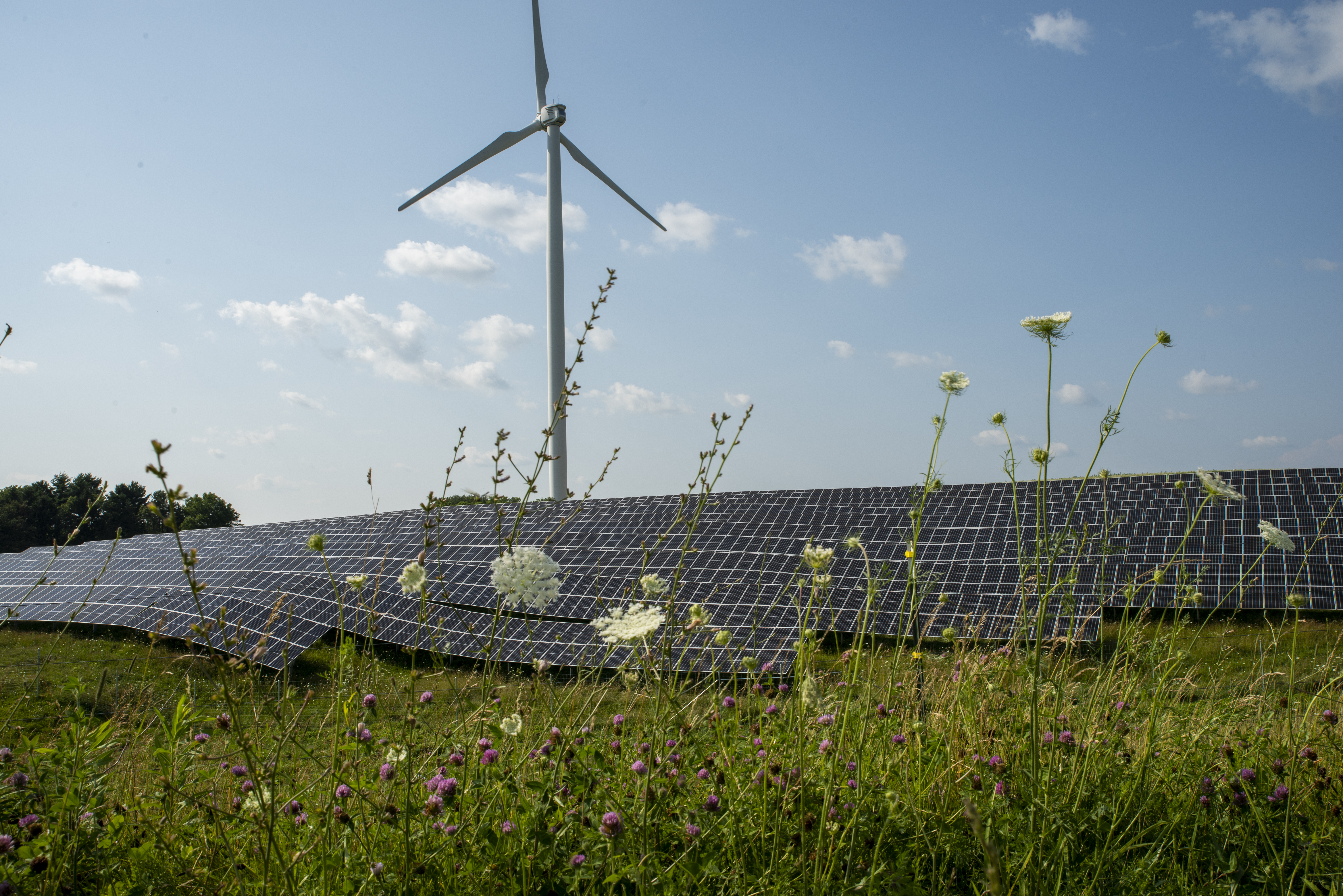Wildflowers in the foreground with solar panels and a wind turbine against a blue sky.