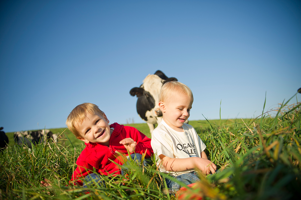Cow approaches children in the pasture under supervision of parents.