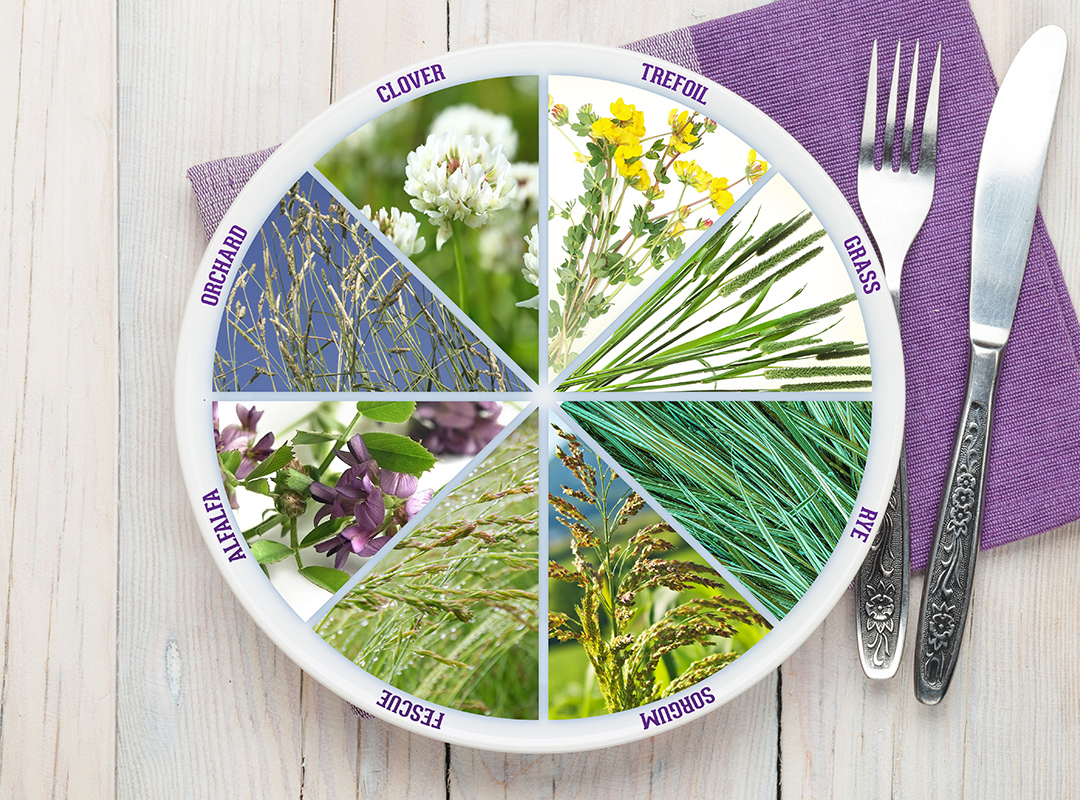 A graphical image of a plate with various pasture grasses represented in a pie-slice pattern.