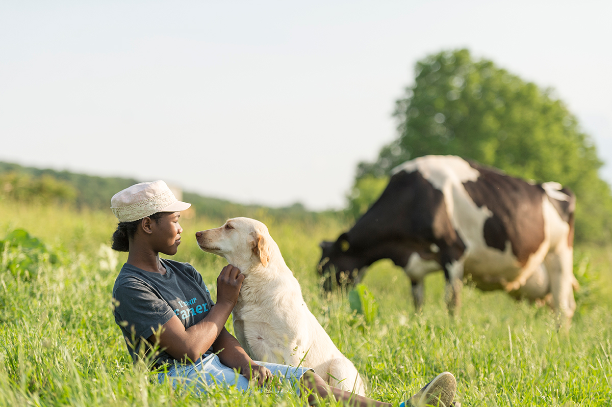 A girl and a yellow lab sit in a pasture looking lovingly into each other's eyes while a Holstein cow grazes in the background..