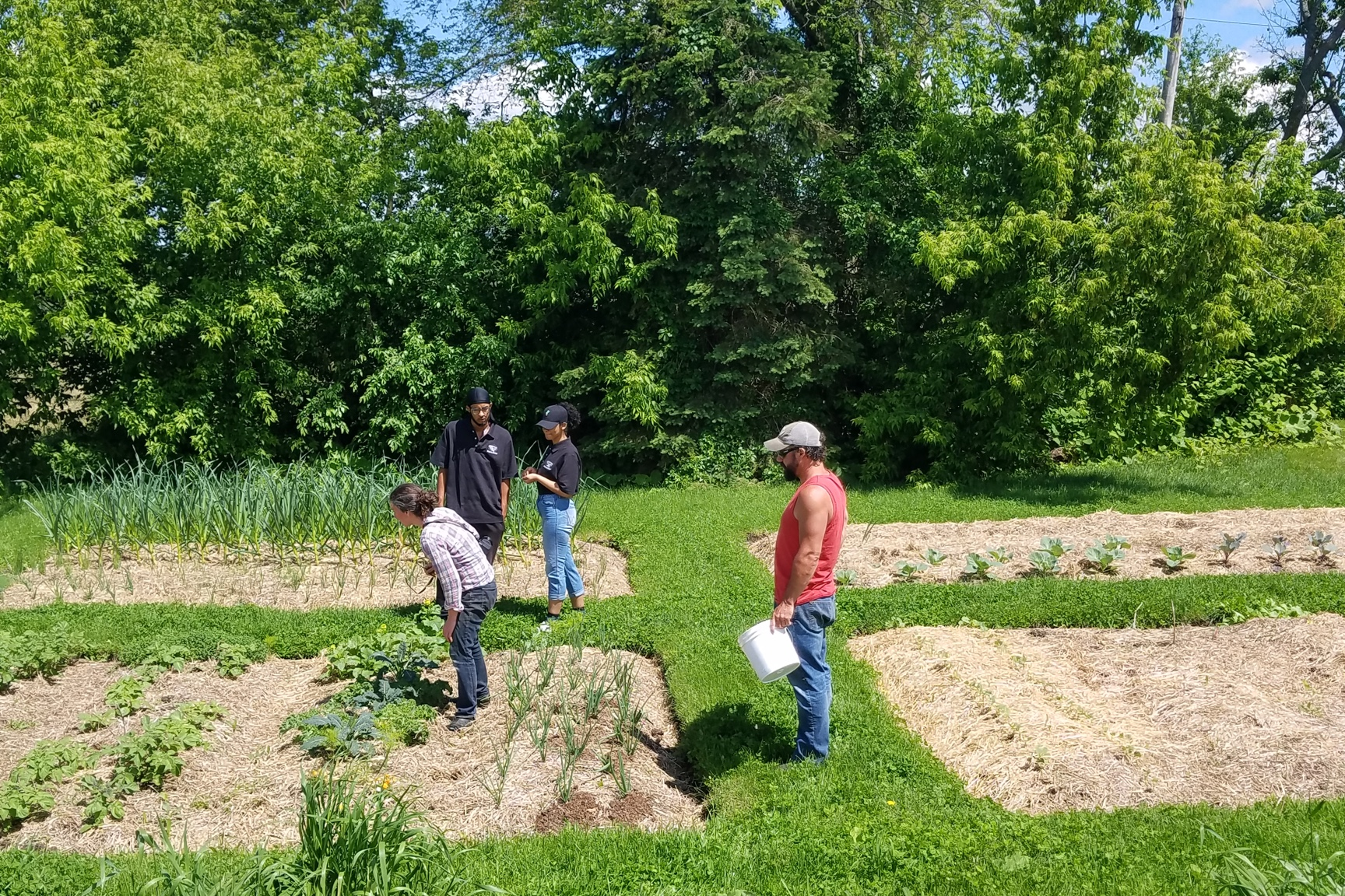 Four people look around a garden plot that has a variety of vegetable plants.