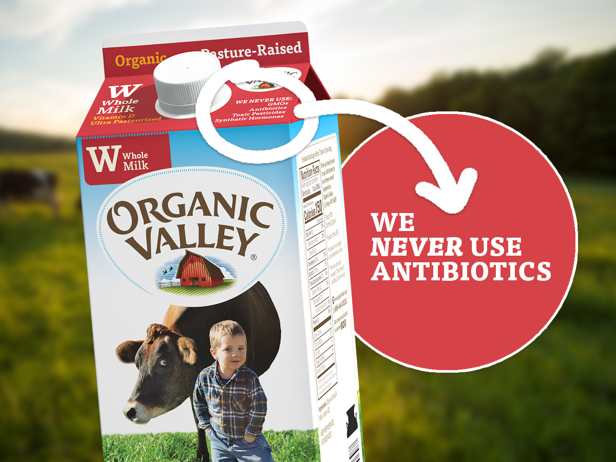 "Organic Valley milk carton that reads ""No Antibiotics."""