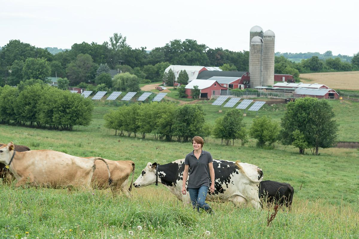 婦女通過農場的綠色牧場地在有太陽電池板的威斯康辛在背景中。