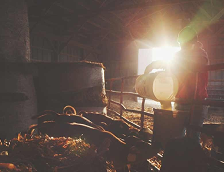 A farmer in a stable giving water to calves as the sun rises behind him.